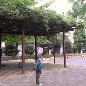 錦中央公園_6