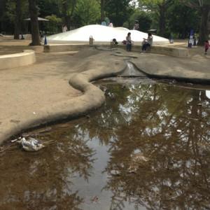 どろんこ池|昭和記念公園 わんぱく広場