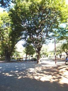 諏訪の森公園1