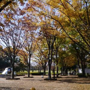 府中の森公園_eyeshot