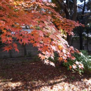 府中の森公園_scene2
