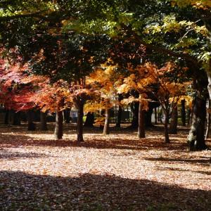 府中の森公園_scene4