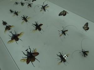 子ども大好き昆虫の標本