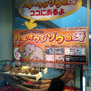 北浅川で発見された新種の古代ゾウの化石